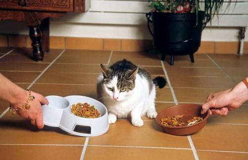 両脇から餌を与えられる猫