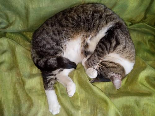 まぶしい寝の猫