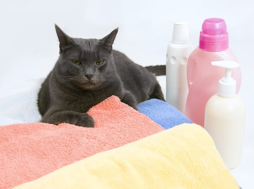 洗剤や柔軟剤とタオルと猫