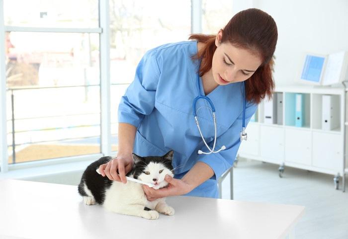 歯ブラシをしてもらう猫
