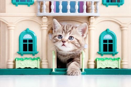 おもちゃの家から顔を出す子猫