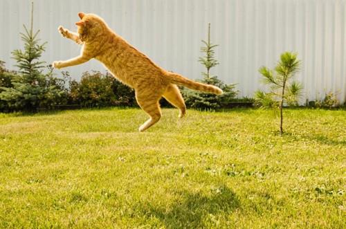 緑色の草の上でジャンプする猫