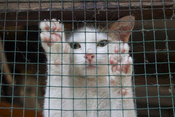ケージに手をかける猫