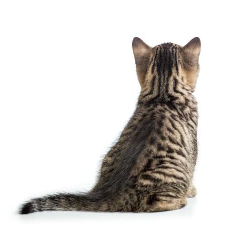 後ろを向いて座る子猫