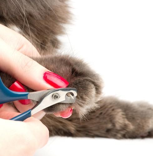 爪切りをする女性の手と猫