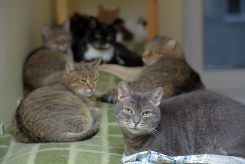 いやそうな顔をした猫と複数の猫