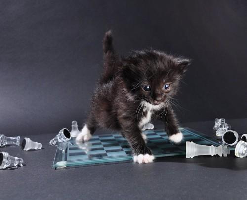 チェスボードの上で遊ぶ子猫