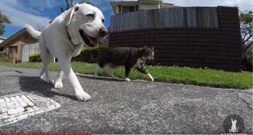 一緒に歩く猫と犬