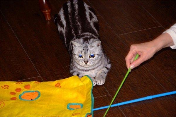 プチホテルフロマージュの猫