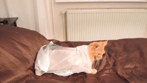 袋の中から猫