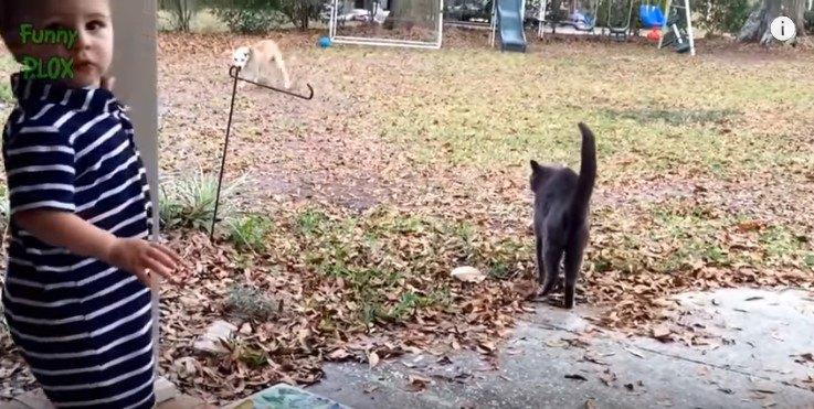 遠くの犬を見る猫