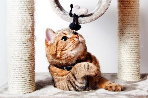 おもちゃに興味を抱く猫