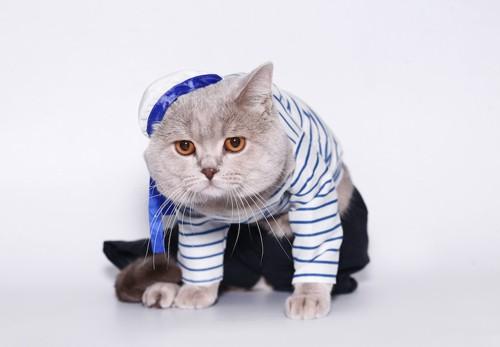 洋服を着せられて嫌そうな猫