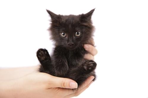 人の手に抱かれた黒い子猫