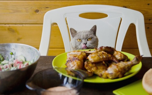 椅子に座ってテーブルの上のチキンを狙う猫