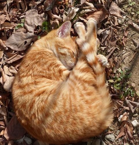 庭で眠る猫