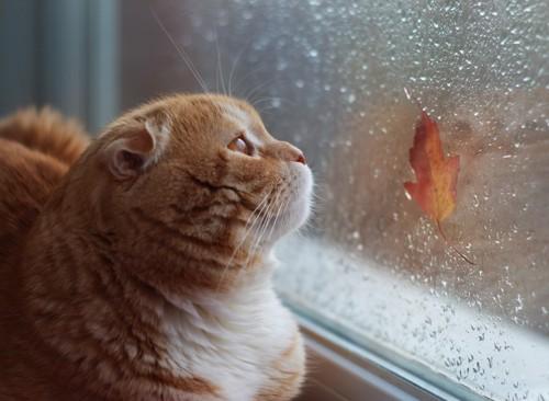 窓から雨が降る様子を見る猫