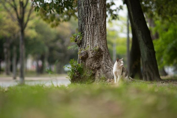 木の横に居る猫