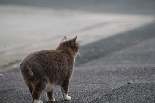 道を歩く猫の後ろ姿