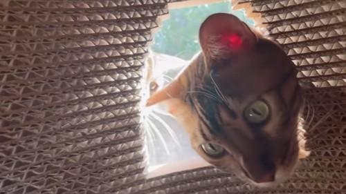 右から窓をのぞく猫