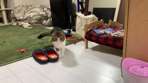 スリッパの横に立つ猫