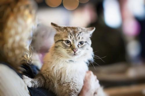 抱っこされて不機嫌そうな表情の猫