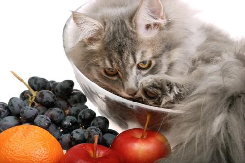 ぶどうと果物と猫