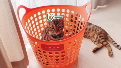 緑色の首輪の子猫