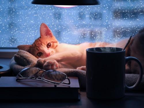 猫冬イメージ