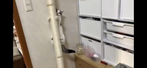 キャットタワーを降りる猫