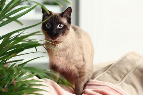 観葉植物のそばで座っている猫