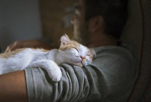 男性の腕で寝ている猫