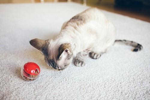 おやつボールで遊ぶ猫