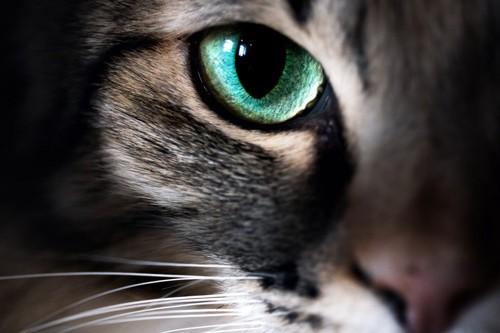 猫の目のアップ