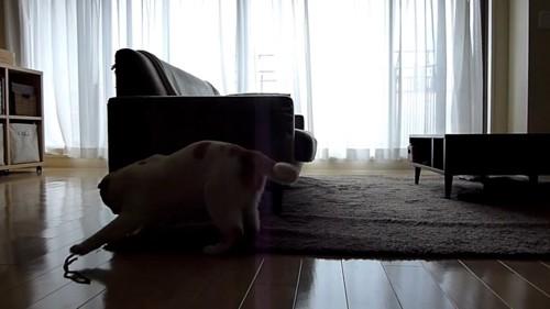 前足でおもちゃを触る猫