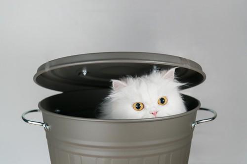 ごみ箱に入る猫