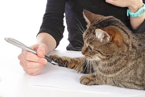 人の持つペンに戯れる猫