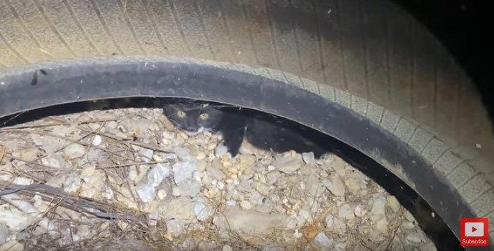 古タイヤの下に隠れる子猫
