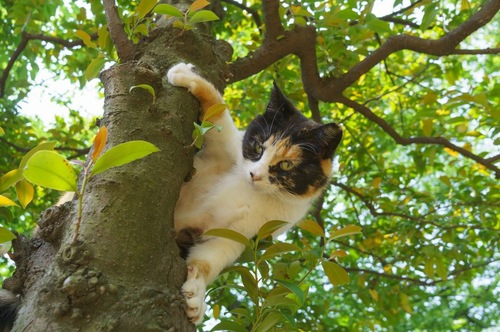 木のぼり猫