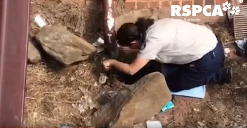 排水口で待ち構える女性