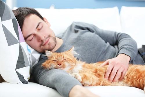 男性の腕枕で寝る猫