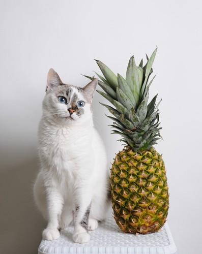 白い猫とパイナップル