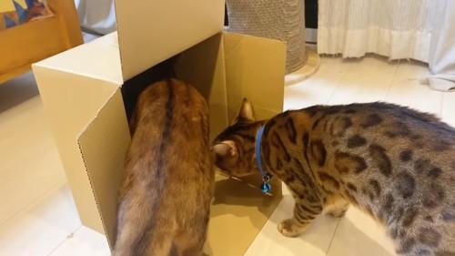 縦に置かれた箱