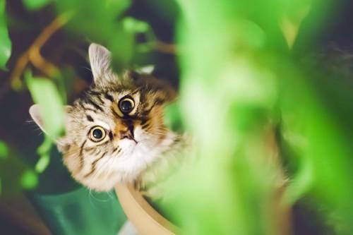 緑の中で何かを狙う猫