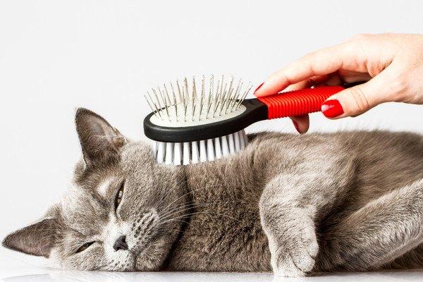 寝転んだ状態でブラシをされる猫