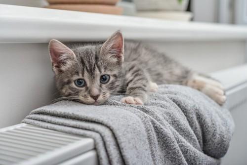 グレーのタオルと猫