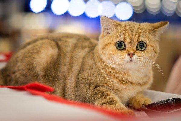 驚いている猫
