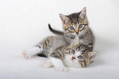 くつろぐ子猫たち