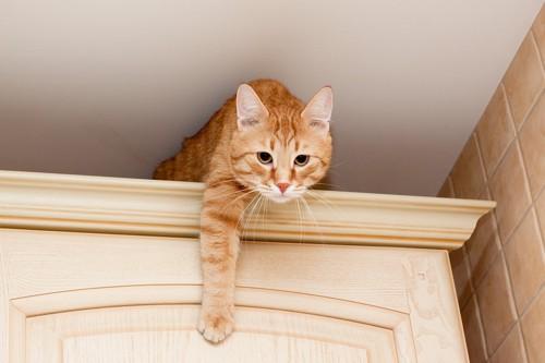 タンスの上に乗って押さえている猫