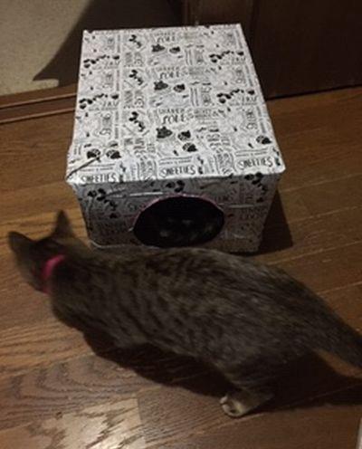 猫の後ろにあるダンボールハウス